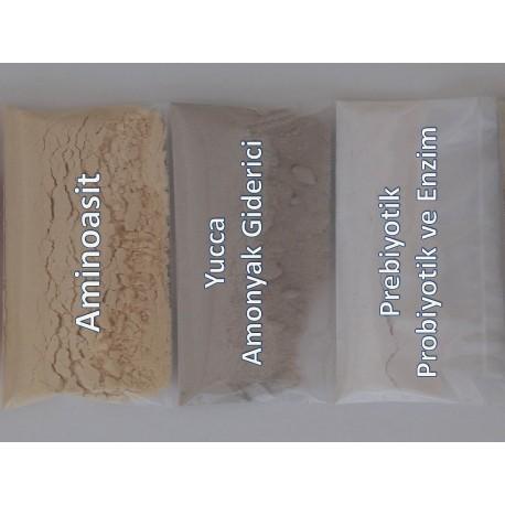 Büyüme Aminoasit Katkısı ve Atraktör